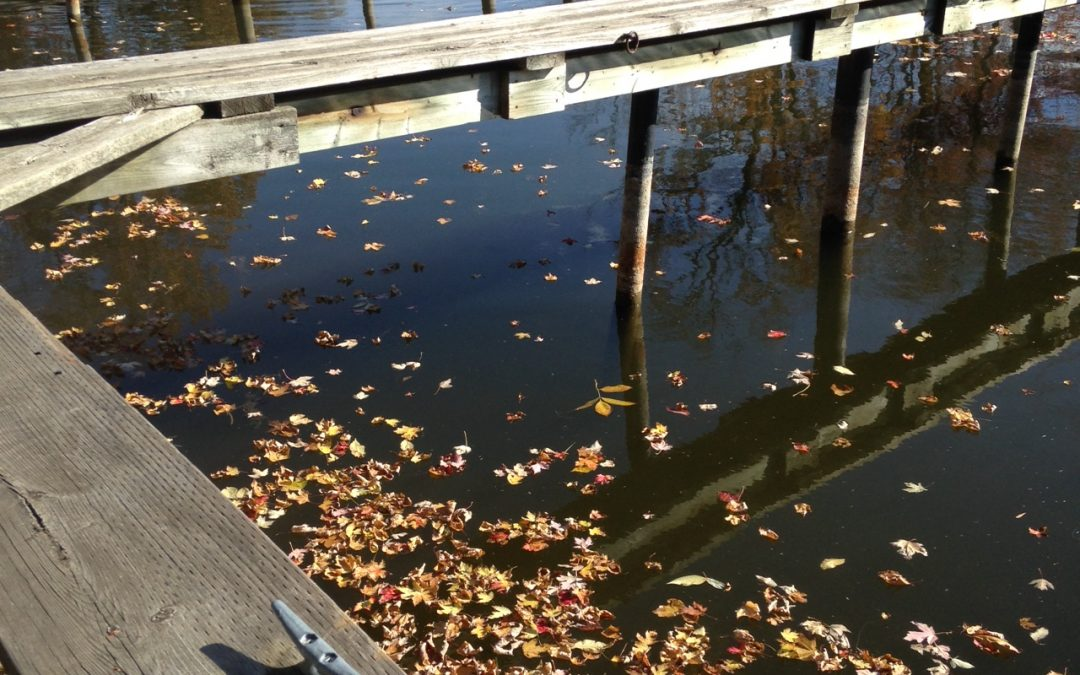 Fall Transitions: Boats Out and Office Hours Changing